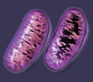 Mitochondrial_Damage_Big_Pharm